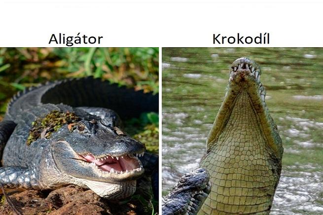 Krokodíl nie je to isté, čo aligátor a žaba nie je to isté, čo ropucha! Toto sú najčastejšie chyby v používaní synoným, ktoré robíme všetci