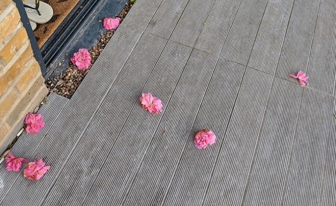 Žena pravidelne nachádzala pred svojimi dverami kvety. Po tom, ako odhalila tajného ctiteľa, ostala v nemom úžase