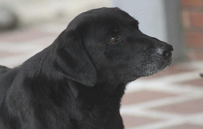 Tento psík svojou inteligenciou a vynaliezavosťou šokoval ľudí. Vymyslel spôsob, ako nakupovať