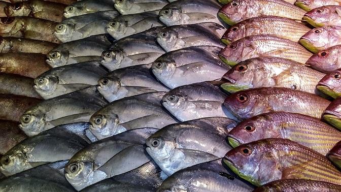 Na Zemi existuje miesto, kde z oblohy pršia ryby. Kde sa to deje a čo je za týmto nezvyčajným javom?