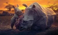 Dojemná pieseň so srdcervúcou animáciou vyzýva na ochranu zvierat. Po zhliadnutí klipu vám nebude všetko jedno