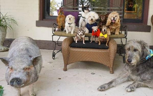 Milovník zvierat sa rozhodol adoptovať si psích seniorov a ďalšie farmárske zvieratá, o ktoré nikto nestál. Takto šťastne si teraz nažívajú