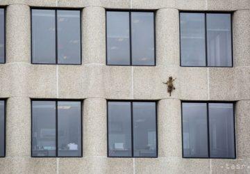 VIDEO: Verili by ste?! Drobný medvedík čistotný sa vyšplhal na 23-poschodovú budovu. Okamžite sa stal miestnym hrdinom a kráľom internetu!