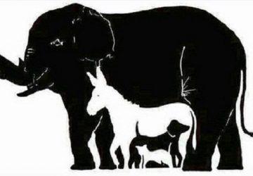 Dokážete odhaliť všetky zvieratá, ktoré ukrýva tento obrázok? 99% ľuďom sa to nepodarí