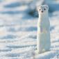 Toto je 12 najzlatších zvierat na svete, o ktorých ste doteraz nevedeli, že vôbec existujú