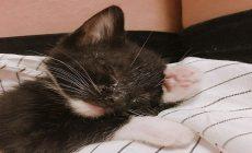 Toto zúbožené mačiatko nikto nechcel, no v priebehu roka sa zmenilo na nepoznanie. Môže za to žena, ktorá sa nad ním zľutovala a vzala si ho domov