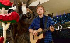 Ed Sheeran nielen pre ľudí, ale aj pre mačky. Môžete ho vidieť v londýnskej mačacej kaviarni!