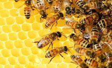 Skvelá správa od našich poľských susedov: Vynašli špeciálny papier, ktorý môže zachrániť včely na celom svete