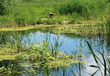 WOW! Neuveríte, aké monštrum vytiahla táto krehká dievčina z rybníka!
