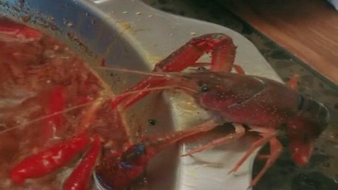 VIDEO: Rak mal skončiť v polievke v čínskej reštaurácii. Takto sa rozhodol zachrániť