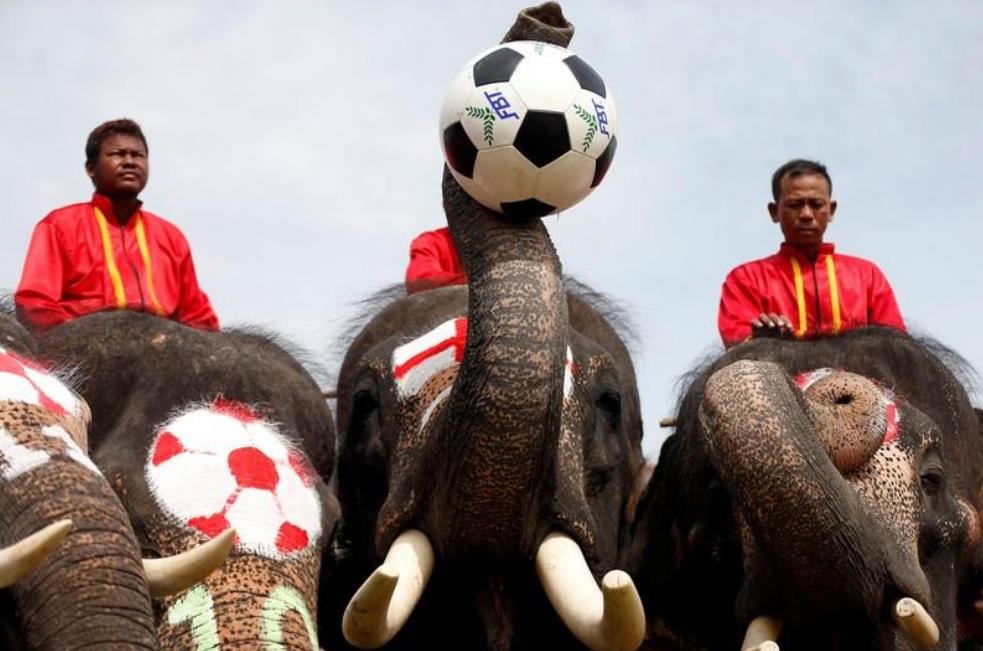 Sloní futbalový tím
