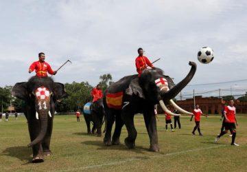 Sloní futbalový tím? Znie to možno ako sci-fi, ale v Thajsku sa to naozaj stalo