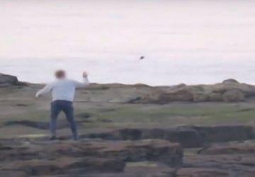 VIDEO: Bezcitní ľudia hádzali do tuleňov kamene. Chceli tak docieliť, aby zvieratá pózovali pred fotoaparátmi