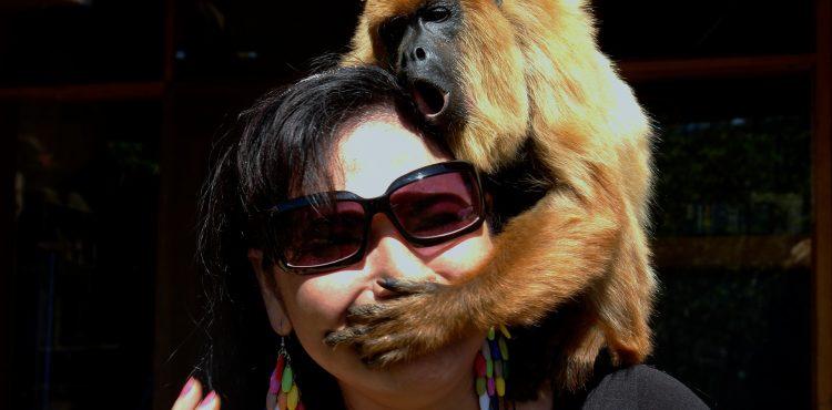 VIDEO: Tak toto musíte vidieť! Zlomyseľná opica vyskakuje v nečakanej chvíli na ľudí na ulici a doslova ich valcuje!