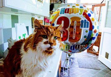 Ako 20-ročná si vzala mačiatko. Dnes má 50 a jej kocúr je najstarším na svete