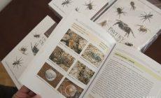 Nič pre arachnofobikov! Vyšla nová kniha, ktorá sumarizuje pavúky žijúce na Slovensku