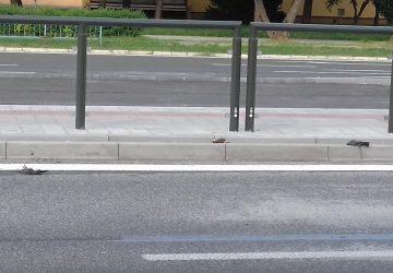 Hromadný úhyn vtákov v Košiciach: narážajú do priehľadných výplní zastávok!