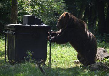 Medvede by sa už viac nemali dostať k odpadkom! Testovali nové kontajnery