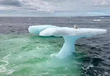 Muži si počas rybolovu všimli na ľadovci živú bytosť. Mysleli si, že ide o tuleňa, no keď sa pozreli bližšie, ostali v šoku a rozhodli sa pomôcť