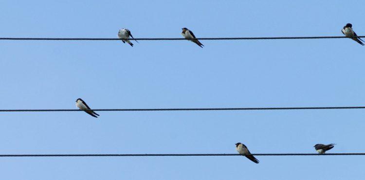 Koniec úhynu vtákov? Mesto na sklenené plochy lepí UV nálepky