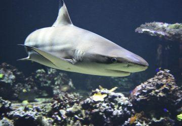 VIDEO: Podaj prst, schmatne celú ruku. Krvilačný žralok hryzol dievčine do prsta a stiahol ju do mora