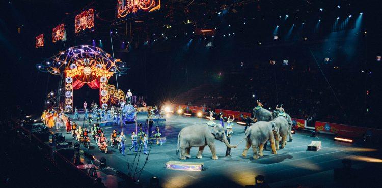 VIDEO: Niekoľkotonový slon spadol v cirkuse rovno do davu prekvapených divákov. Bol zdrogovaný?
