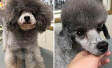 Psí kaderník mení psíky na nepoznanie! Pozrite si na premeny rozkošných chlpáčov
