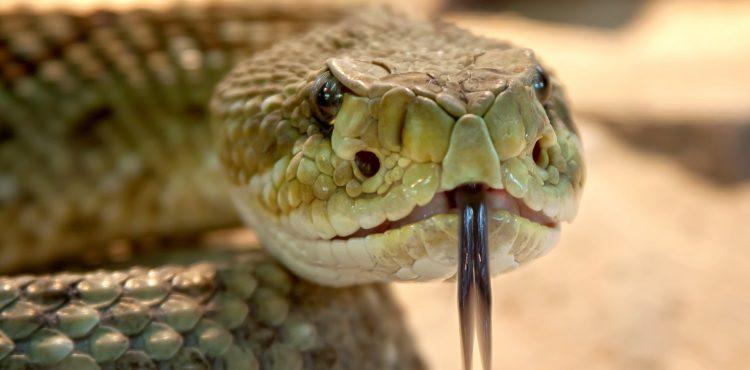 Veľké nešťastie! Malého chlapčeka uhryzol v Malej Fatre obrovský had!