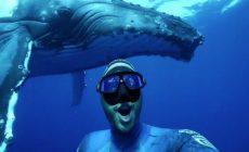 VIDEO: Potápač si splnil sen. Plával s veľrybami neuveriteľne dlhý čas