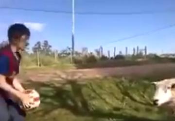 VIDEO: Táto ovca je skutočná športovkyňa! Pozrite sa, ako jej to ide s loptou