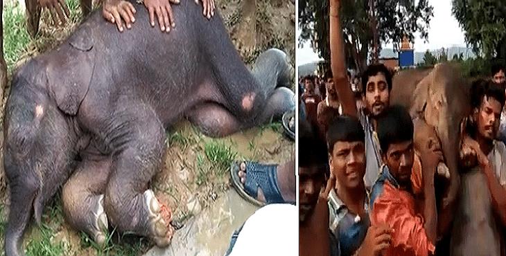 Zúbožené sloníča mohlo prísť o život. Zachránili ho dedinčania, ktorí ho neváhali niesť niekoľko kilometrov