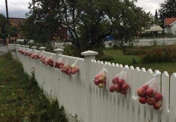 Inšpirujte sa! Žena vešia na svoj plot tašky s jablkami, ktoré si okoloidúci môžu vziať zdarma