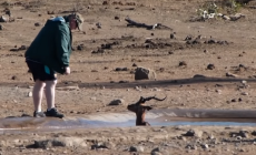 Turista zbadal antilopu uviaznutú v bahne. Neváhal a rozhodol sa jej pomôcť