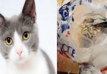 Mačka bojovníčka proti drogám? Táto si ako korisť dotiahla z ulice poriadny balík drog