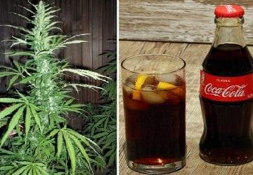 Coca-Cola by chcela začať vyrábať nápoj s obsahom marihuany. Ľuďom by mal pomôcť pri zdravotných problémoch