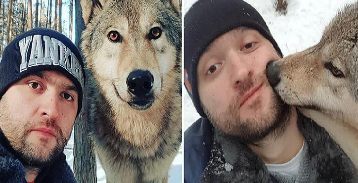 Zachraňuje vlky, ktoré sa potom zotavujú v rehabilitačnom centre. Divoké zvery sa mu oplácajú láskou a dôverou