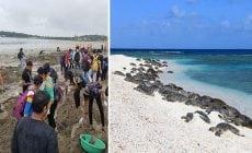 Dobrovoľníci vyčistili odpadom zamorenú pláž. Po dlhých rokoch sa tam vrátili morské korytnačky