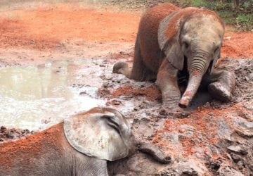 Krutosť pytliakov nemá hranice! V Afrike našli 87 mŕtvych a zohavených slonov, ktorí boli v zúboženom stave
