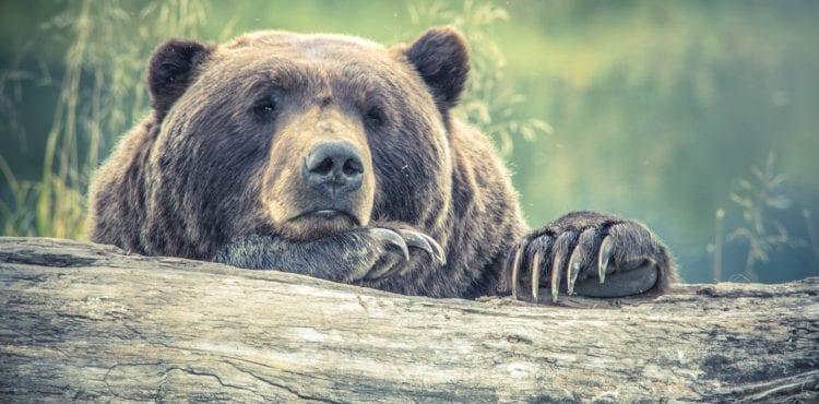 Medvede sa chystajú na hibernáciu. Ktoré zvieratá v zime spia tiež?