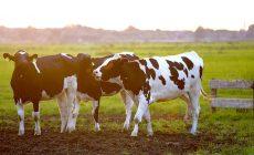Zachránime planétu tým, že nebudeme jesť mäso?