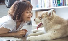 Psy znižujú pravdepodobnosť srdcových ochorení, tvrdí štúdia