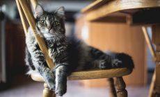 Čomu sa vyhnúť, keď chcete vycvičiť mačku podobne ako psa