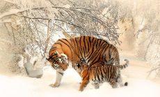 Ľudstvo zahubilo až 60 % živočíchov. Hoax alebo pravda?