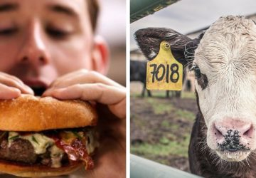 Počet vegánov neustále narastá. Pomôže to našej planéte?