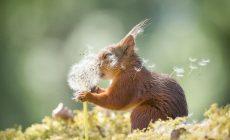 Najroztomilejšie fotky veveričiek, ktoré musíte vidieť!