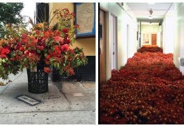 Živé kvety v odpadkových košoch a v opustenej budove bývalého sanatória. Viete, aký odkaz v sebe ukrývajú?