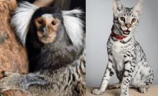 10 najdrahších domácich zvierat, ktoré si môžeš kúpiť na Slovensku