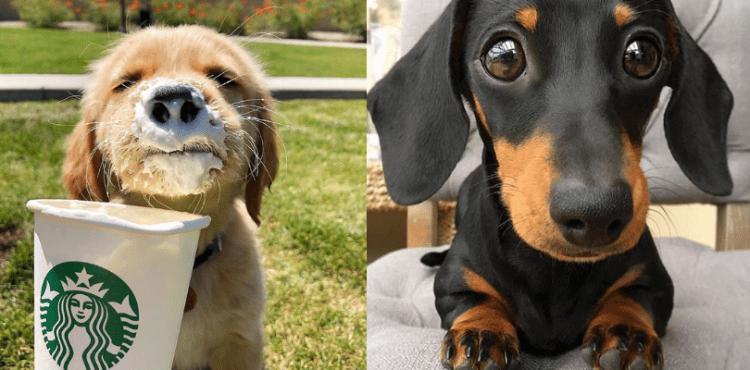 21 najkrajších šteniatok, ktoré vám urobia deň
