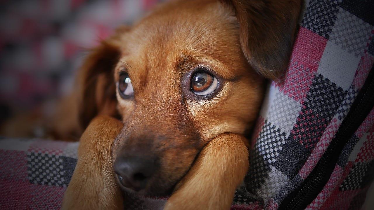 Pes ako najlepší priateľ človeka