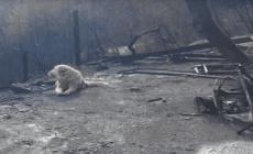 Tento pes zázrakom prežil obrovský požiar. Rodina ho nemohla nájsť, on čakal na mieste zhoreného domova